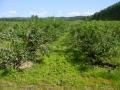 plantacja 17.07.2014r. 042.jpg