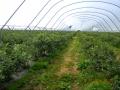 plantacja 17.07.2014r. 058.jpg