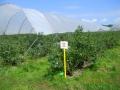plantacja 17.07.2014r. 073.jpg