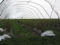 plantacja i nie tylko 348.jpg