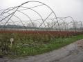 plantacja i nie tylko 381.jpg