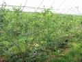 plantacja i nie tylko 441.jpg